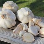 carcassone_wight_seed_garlic_the_garlic_farm.jpg