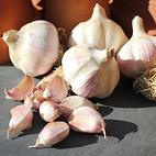 lautrec_wight_seed_garlic_the_garlic_farm.jpg