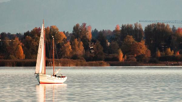 Wood ketch with just foresail up in very light winds, trees with autumn colors on the shore behind it